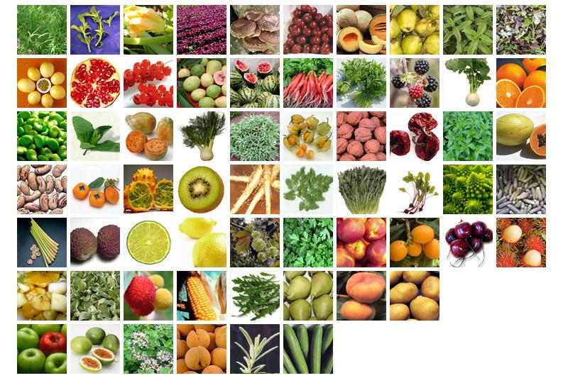 Frutas Y Verduras Grupo Hnos Gallego Fdez